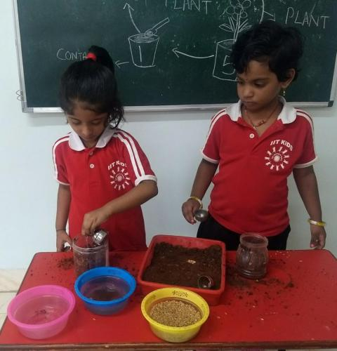 Germination of seeds (2)