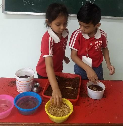 Germination of seeds (3)